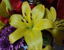 FlowerOff 4site